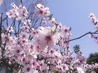 【重ねてのお願い】来年3月~4月をご検討のお客様へ